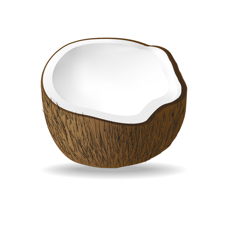 Half coconut isolated on white background. Realistic vector illustration.