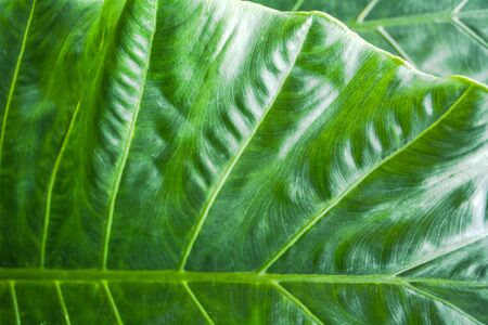 Green leaf texture. Leaf texture background.