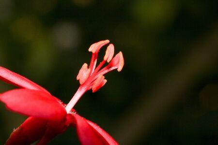 01: red flower 01