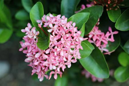 01: pink flower 01