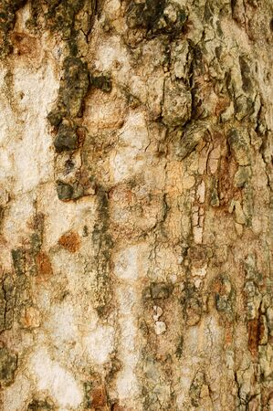 The Tree Bark Stock Photo - 9396709