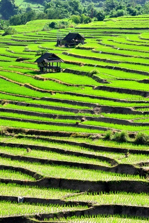 Step Rice Field at Mae-Jam, Chiang Mai, Thailand photo