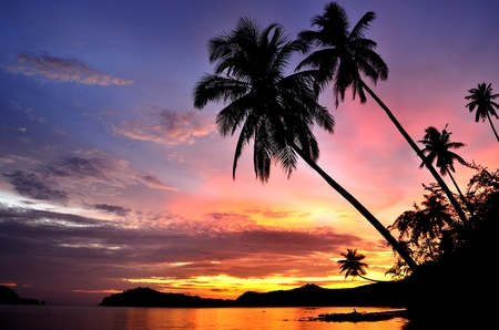 beach sunset: Palm Trees Silhouette At Sunset