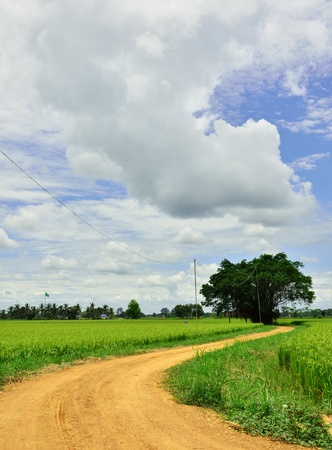 Route to the rice field photo