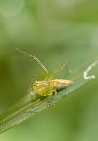 Macro Of Spider On The Grass