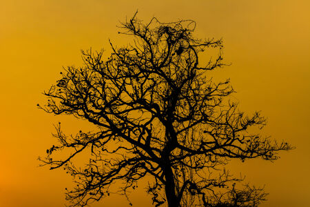 Silhouette Dry Tree At Sunset