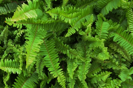 ferns in tropical rain forest