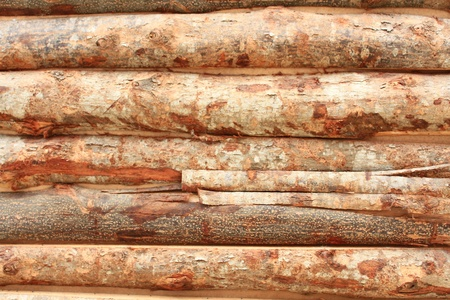 old timber of wood texture  Stock Photo - 21937016