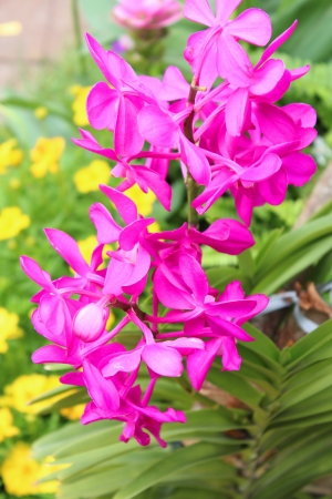 Purple orchid  in garden Stock Photo