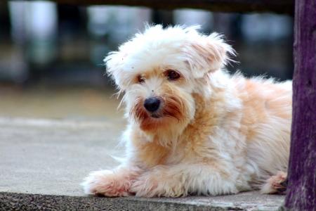 Street Dog Stock Photo - 24471117
