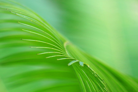 abstact: Palm leaf  , Abstact