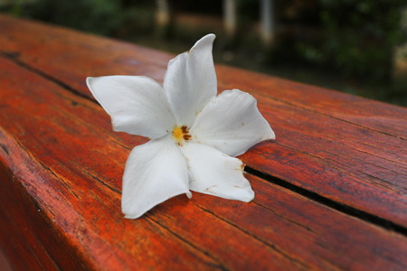 beautify: White flower on wooden table