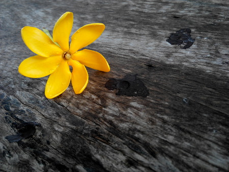 Beautiful golden gardenia  on wood