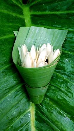 White Champaka  in banana leaf  on green leaf background Stock Photo