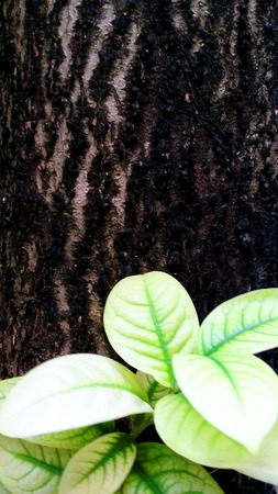 Green leaf in front of a tree bark