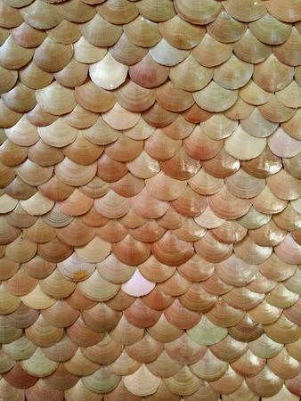 Texture of enamel venus shell
