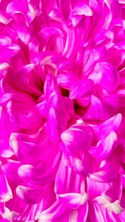 Beautiful pink petal , Close-up