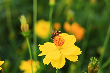 Insect perched on yellow flower