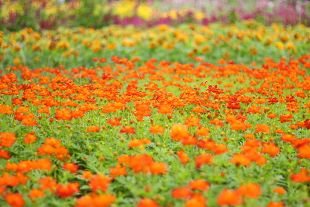 Colorful of flowers in public park Stock Photo