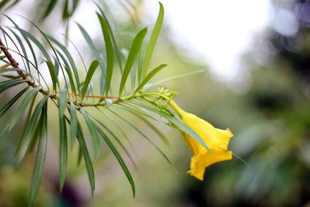 ?Yellow flora in front of blur background