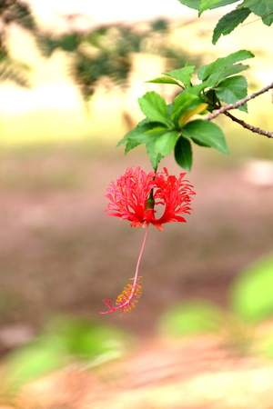 Red flower in front of blur background