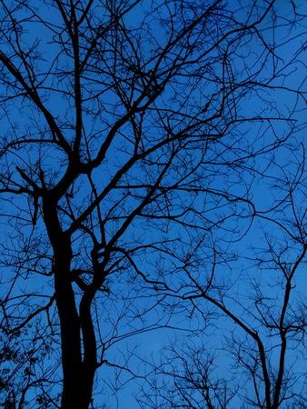 spiritless: Silhouette of trees