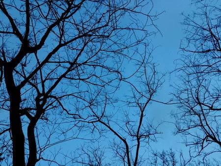 penumbra: Beautiful silhouette of trees