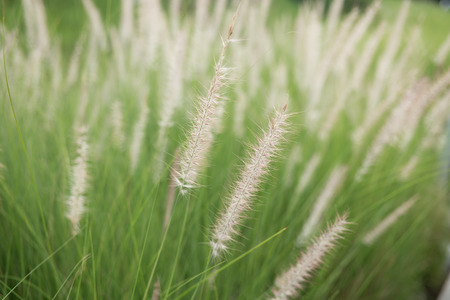 Field of grass flowers