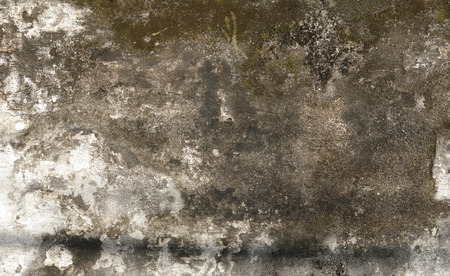 Old Peeling White Paint Wall Background with moss Reklamní fotografie