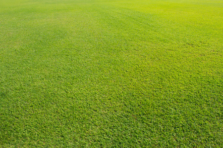Field grass in sunlight. Zdjęcie Seryjne - 41600029