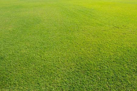 Gebied gras in het zonlicht.