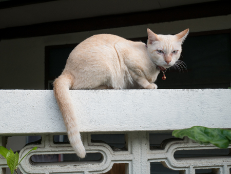 Siamese cat warily sitting on fence.