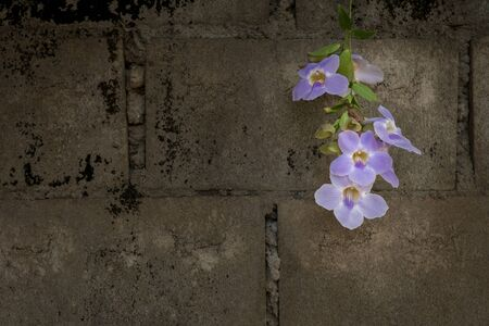 Puple flowers on concrete wall