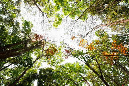ant eye view of colorful leaves tree in jungle background