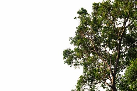 vue de dessous de l'arbre dans la jungle et l'éclairage du concept de la forêt et de l'environnement du matin