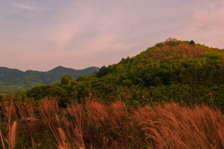 beautiful scenery of mountain in afternoon there is communist grass field is foreground,Koh yao yai,Phang Nga,Thailand
