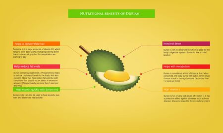 nutritional benefits of Durian Infographic about nutrients in Avocado Fruit and agriculture vector illustration nutrition and healthy food Иллюстрация
