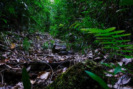 Tropical rainforest is lush in Thailand