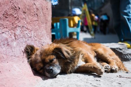 feng: Dog sleeping on walking street in Feng huang, Hunan, China Stock Photo