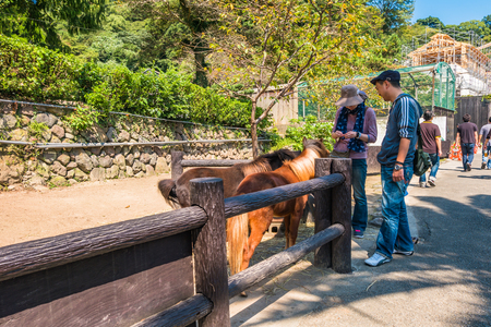 hydrothermal: Beppu, Japan - September 28, 2014: Tourists giving food to miniature houses in Yama Jigoku or mountain hell in Beppu, Oita, Japan. Yama Jigoku or mountain hell features small ponds of steaming hot water and a run-down zoo with large animals in small cages Editorial