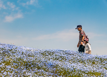 hectares: Ibaraki, Japan - May 1, 2016: Tourists at Hitachi Seaside Park in Ibaraki, Japan. Hitachi Seaside Park is a spacious park in Ibaraki Prefecture, Japan featuring a variety of green spaces and seasonal flowers spread out across 350 hectares, as well as an a Editorial