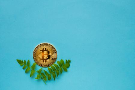 Golden Bitcoins with leafs on blue background Reklamní fotografie