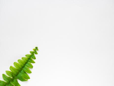 Fern leaf on white background Stock Photo