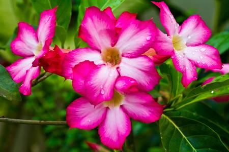 Rosas flores Foto de archivo