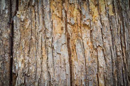 tree bark texture Stock Photo - 9698854