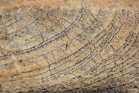 古い木材のテクスチャ