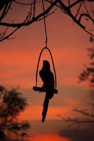 lonely bird: Lonely bird Stock Photo