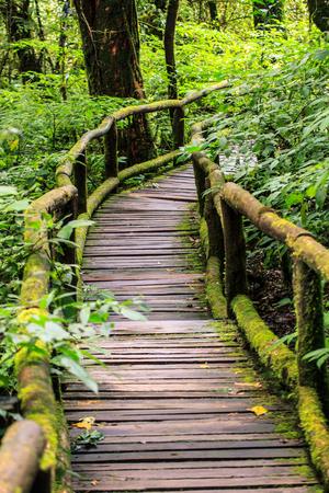 森の中の経路