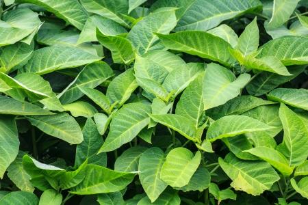 緑の葉 写真素材