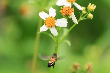 Bee Stock Photo - 25117528